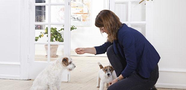 Fodring af hundehvalpe