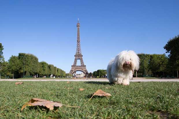 Regler for rejse med kæledyr