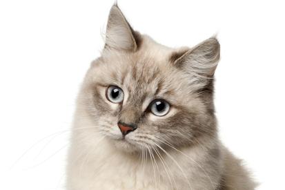 diabetes kat