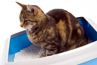 Urinvejsproblemer hos katte