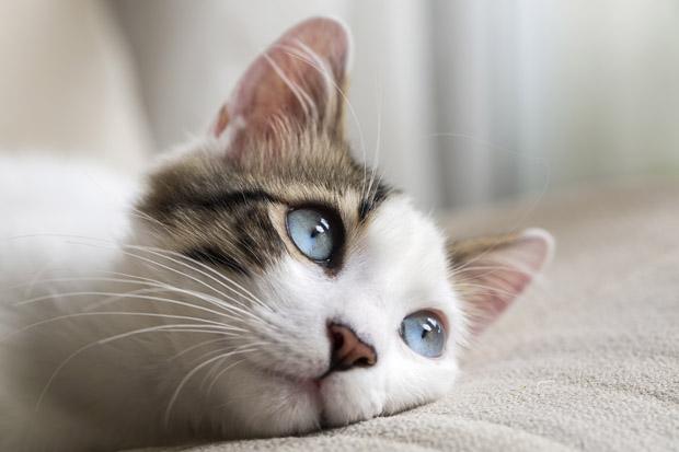 Kattebyld