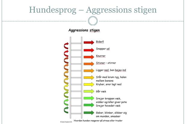 """En vigtig slide """"Aggressions stigen"""""""