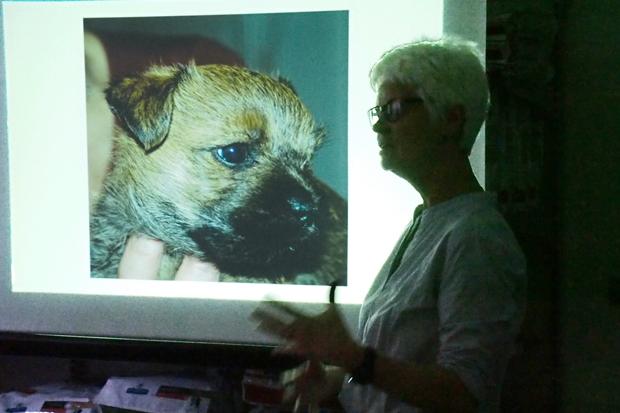 Helle har en masse erfaring som opdrætter af Cairn Terrier
