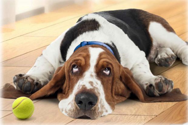 sterilisering af hund