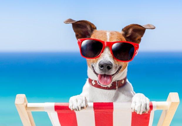 hund på ferie