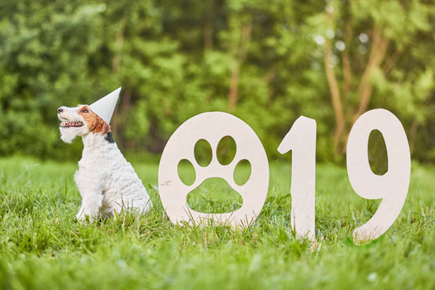 Nytårsmedicin til hunde