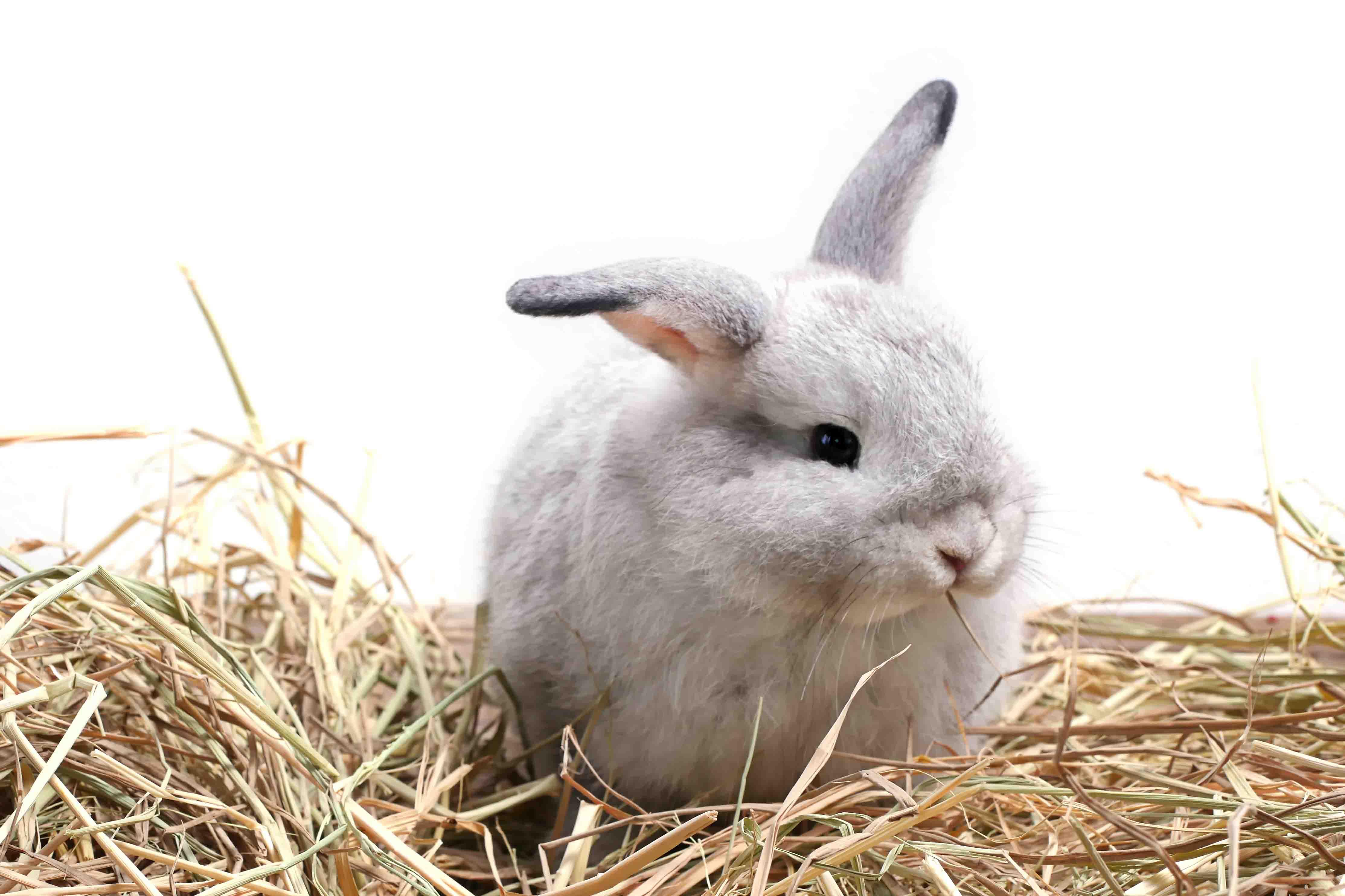 Fodring af kaniner
