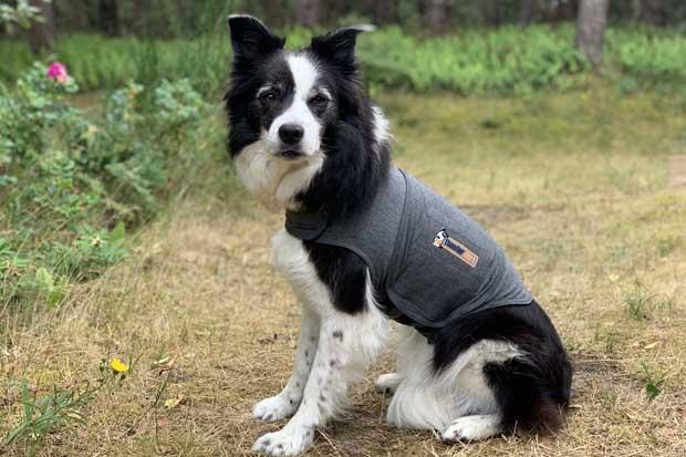 Thundershirt -en hjælp mod angst
